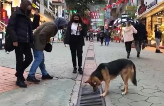 Mazgala bakan sokak köpeği ilgi odağı oldu