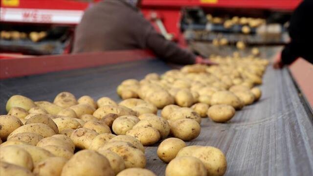Patates üreticileri teşvik bekliyor