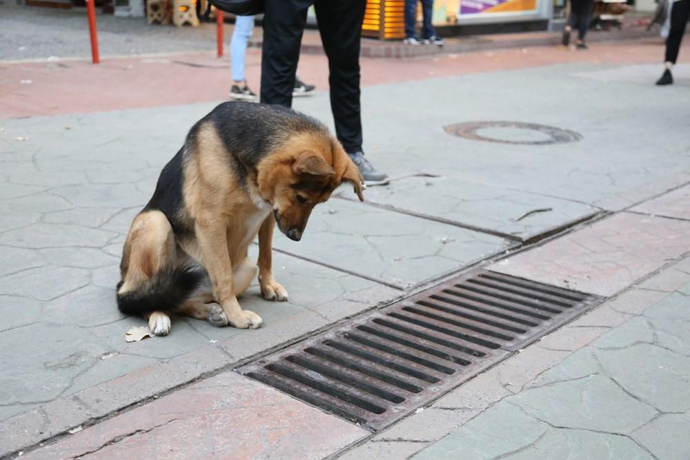 Sürekli mazgalı izleyen köpeğin sırrı çözüldü