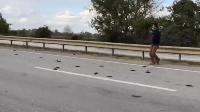 Sakarya'da kuşların esrarengiz ölümü!