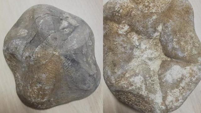 Çanakkale'de bulundu! Piyasa değeri 4 milyon lira