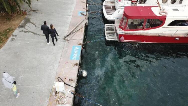 İstanbul Boğazı'nda şaşırtan manzara! Yüzlercesi istila etti