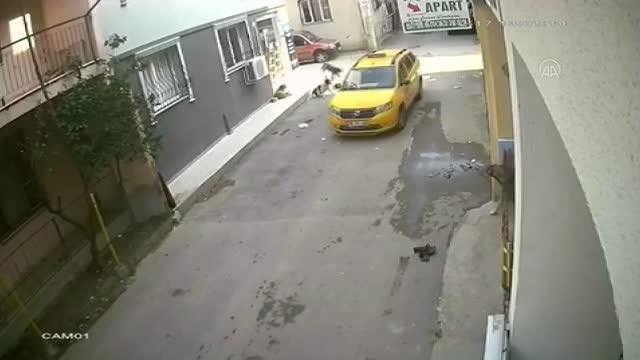 Yürek sızlatan görüntüler! Vicdansız taksici yavru köpeği ezdi