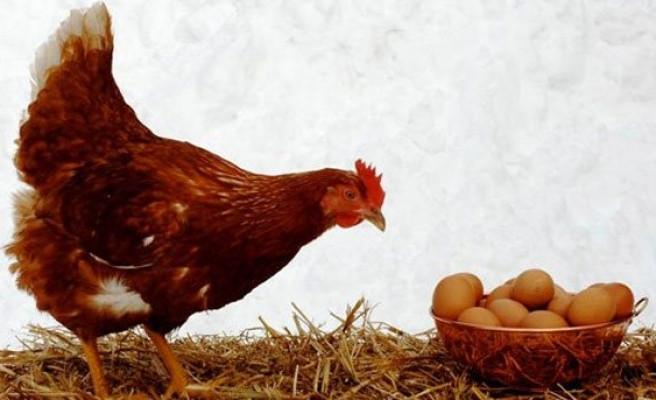 Yumurtanın fiyatı tavuktan pahalı! Bakanlık harekete geçti