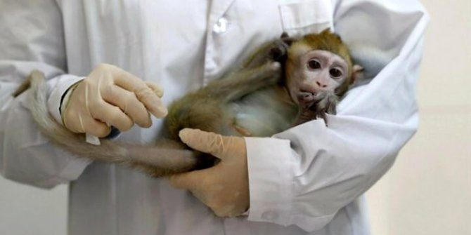 NASA 27 maymunu öldürdü!