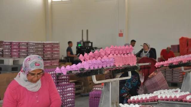 Yükselmeye devam ediyor! Yumurta fiyatları neden arttı?
