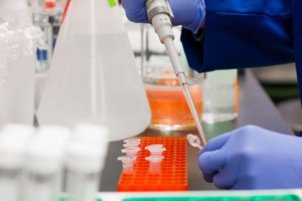 Yeni araştırma: Koronavirüse karşı bağışıklık ne kadar sürüyor?