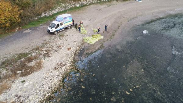 Avcılar sahilinde 10 ton denizanası toplandı