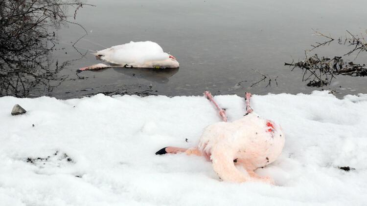 Baraj Gölü'nde kahreden görüntü