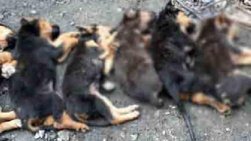 Zonguldak'ta yavru köpekleri zehirledi !