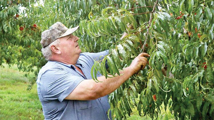 Çiftçinin zaferi! Kimya devleri 265 milyon dolar tazminat ödeyecek