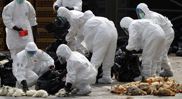 Çin'de koronavirüsünden sonra yeni salgın alarmı