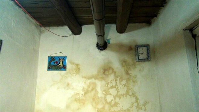 Kars'ta akrep paniği ! 4 ayrı evde görüldü