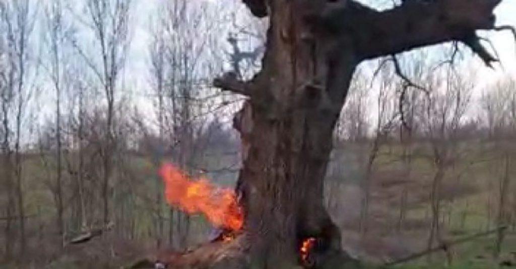 400 yıllık çınar ağacını böyle yaktılar!