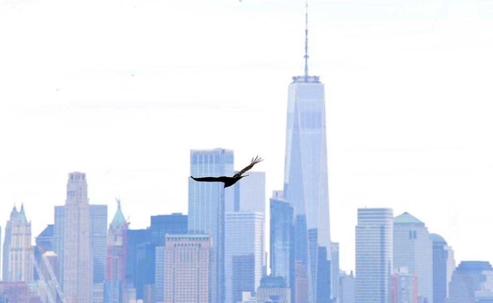 Ceset kokusu alan akbabalar New York semalarını işgal etti