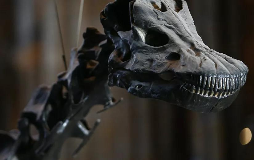 70 milyon yaşında bir dinozor fosili bulundu