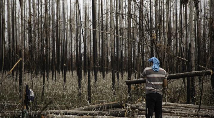 Salgın döneminde orman katliamı %150 arttı