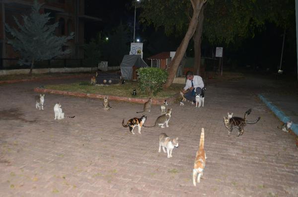 Anne kedi ve 6 yavrusunun öldürülmesi tepkilere neden oldu