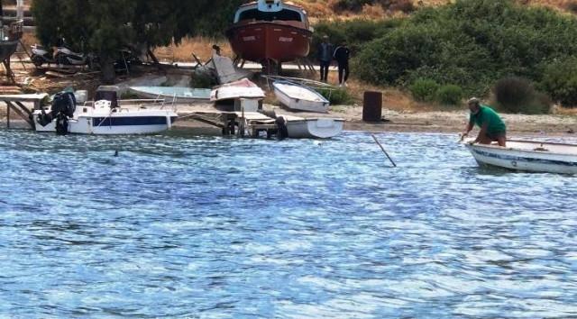 Bodrum'da vahşet! Köpek balığını mızrakla öldürdüler