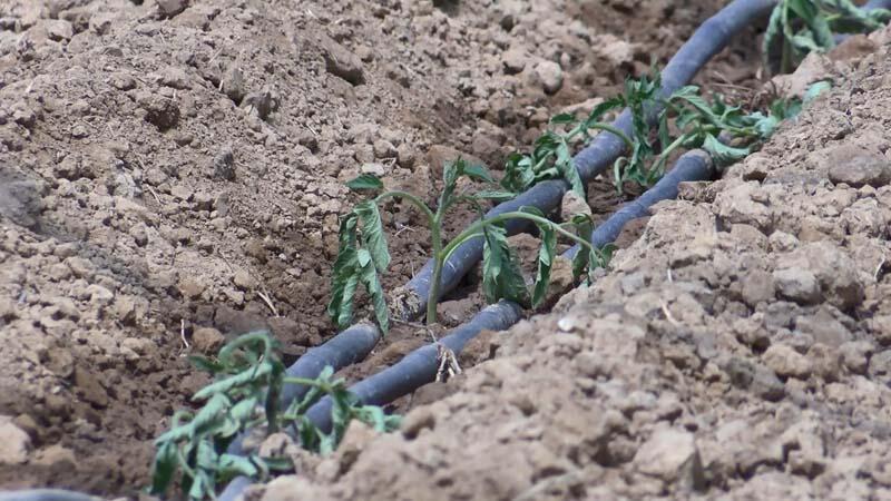 Koronavirüs İstanbul'da tarımı etkilemedi: Üretim arttı