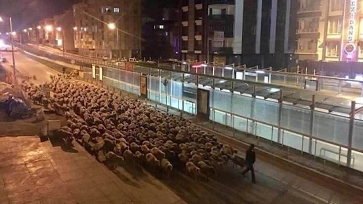 Sokağa çıkma yasağı sırasında inanılmaz görüntü!