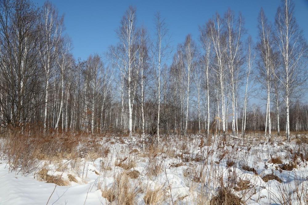 Dünya'nın gördüğü en sıcak yıl! Sibirya'da sıcaklık 30 dereceyi gördü