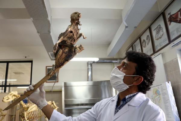 Evin bodrumunda bulunan iskeletin sırrı çözüldü