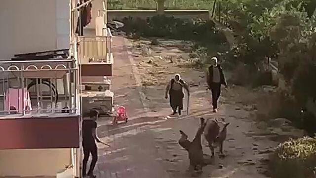 Burdur'da sahibinden kaçan boğa ortalığı birbirine kattı