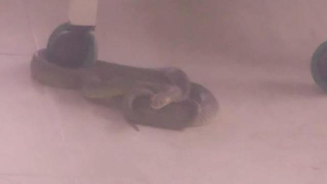 Tekstil atölyesinde yılan paniği kamerada