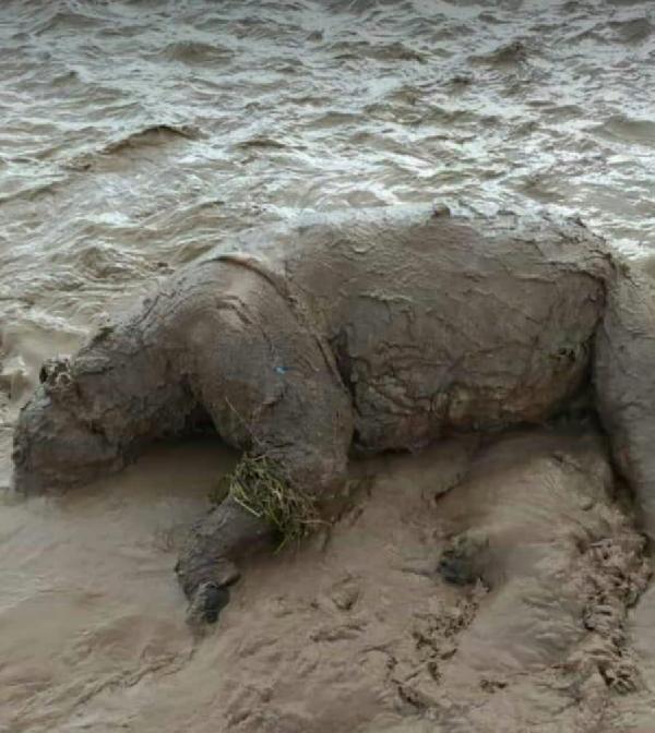 Van Erciş'te sel felaketi! 1 ayı telef oldu - Resim: 4
