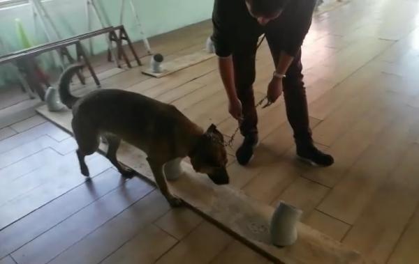 Kanseri teşhis edecek köpekler yetiştiriliyor!