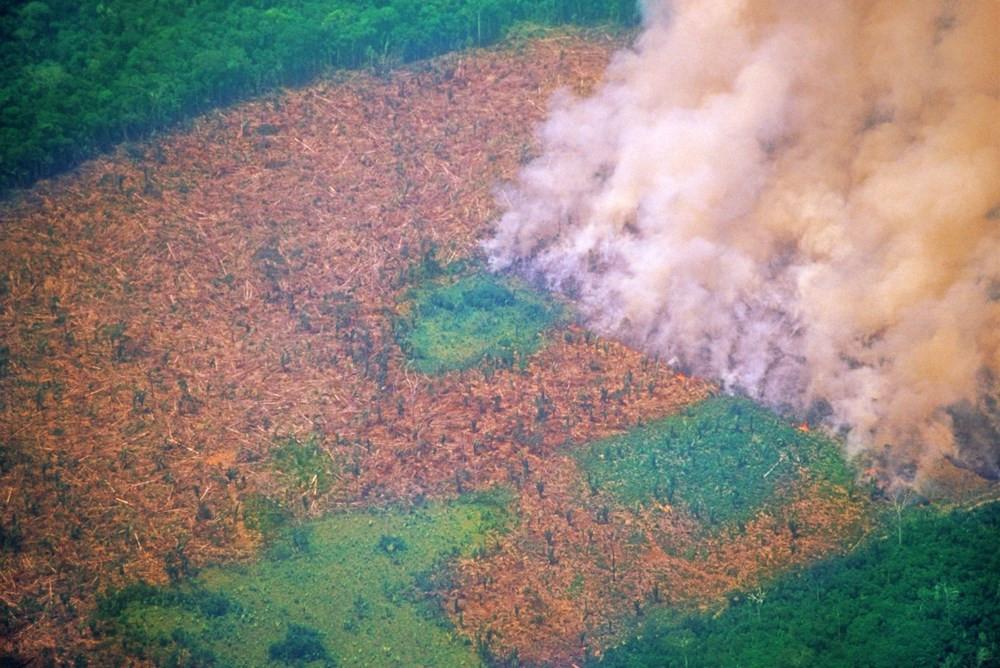 Amazon'daki ormanlar tarihinin en kötü yılını yaşıyor