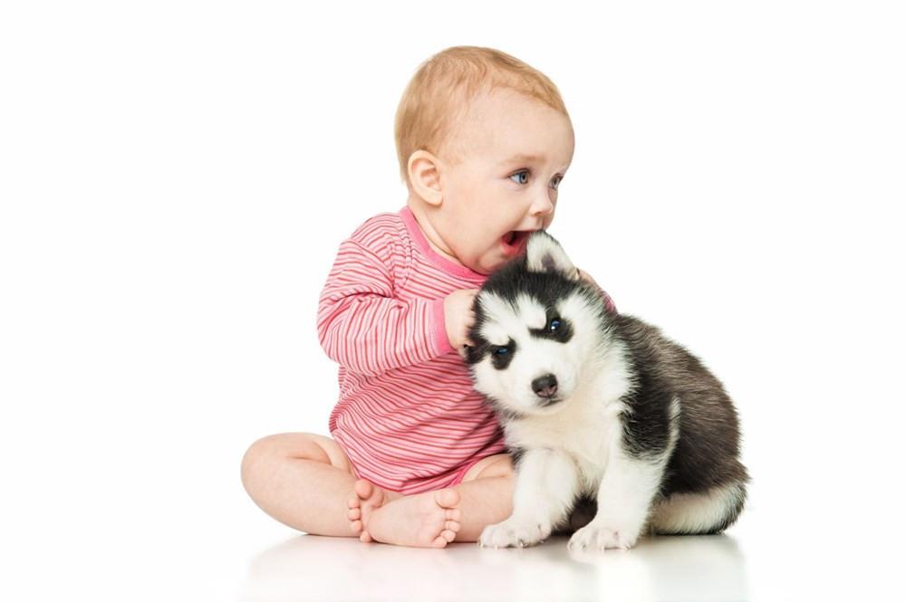 Bilim insanlarından yeni formül: Köpek yaşı nasıl hesaplanır?