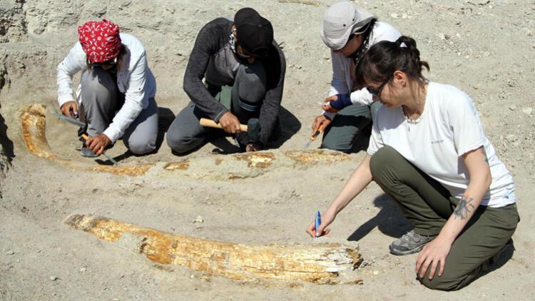 Kayseri'de 7,5 milyon yıllık yeni keşif!