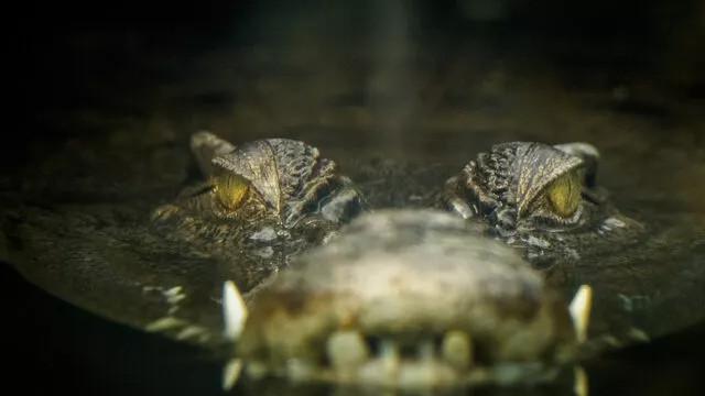 Keşişin ''suya dal'' tavsiyesine uyan genç, timsahlara yem oldu