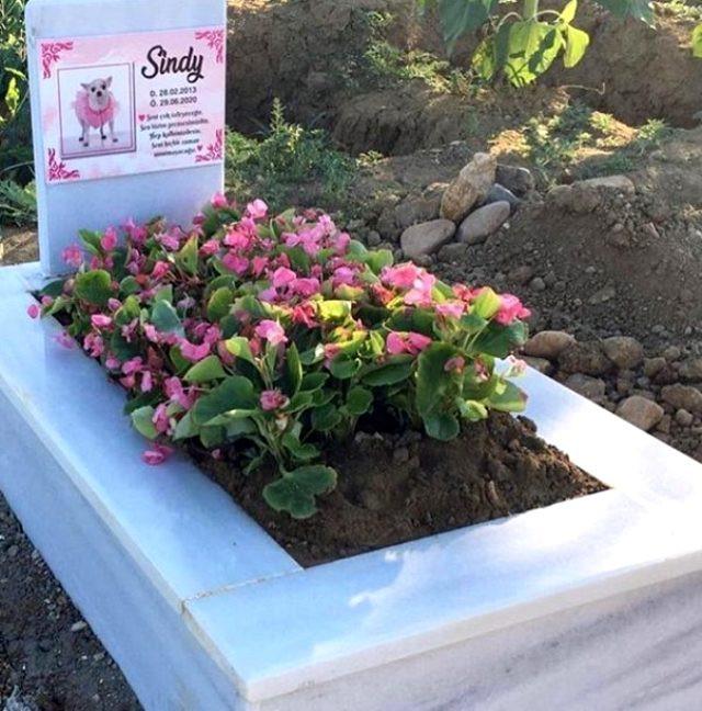 Cicişler'in köpeklerine yaptırdığı mezar olay oldu