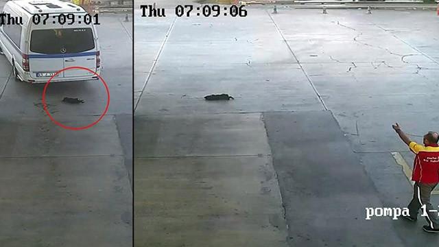 İzmir'de minibüs şoförü, yavru köpeği ezerek öldürdü!