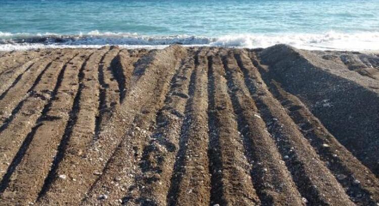 Antalya'da pes dedirten olay! İş makinesi, kaplumbağa yuvalarını ezdi!