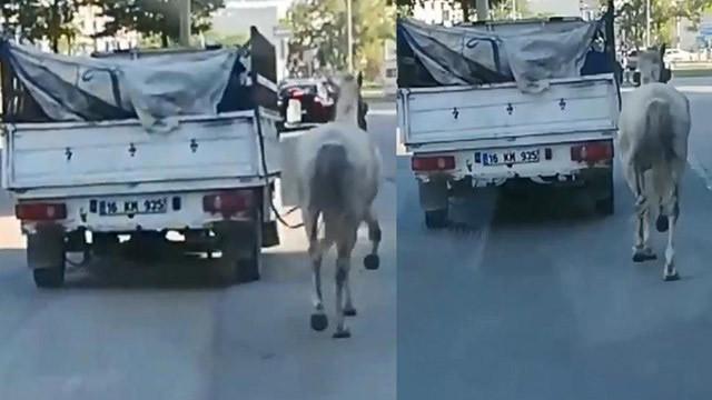 Atı kamyonete bağlayıp metrelerce koşturdular!