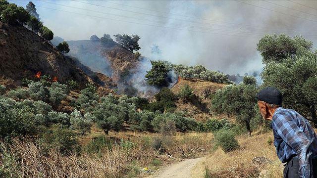Aydın'da zeytinlik ve incirlik alanda yangın