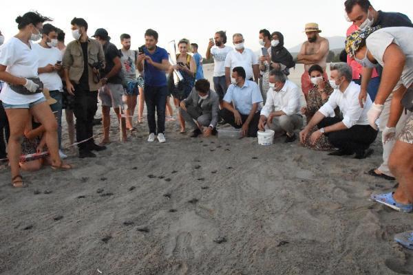 Binlerce yavru kaplumbağa denizle buluştu