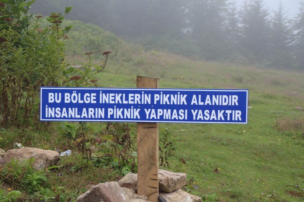 ''Bu bölge ineklerin piknik alanıdır'' tabelası hem güldürdü hem üzdü