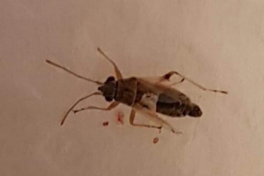 Kulağından canlı sinek çıktı!