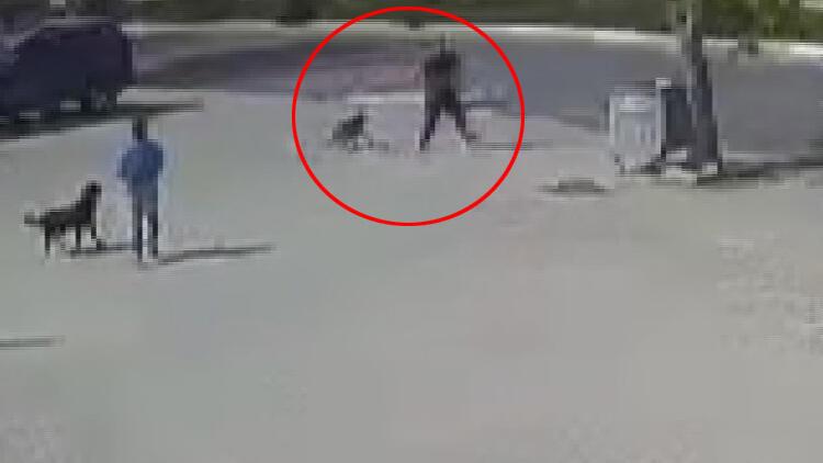 İstanbul'da korkunç olay! Sokak köpeğini böyle öldürdü