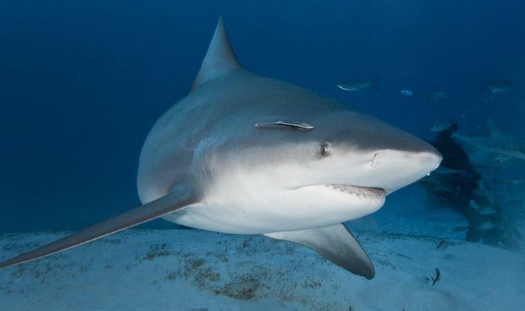 Hamile kadın eşini köpekbalığı saldırısından kurtardı