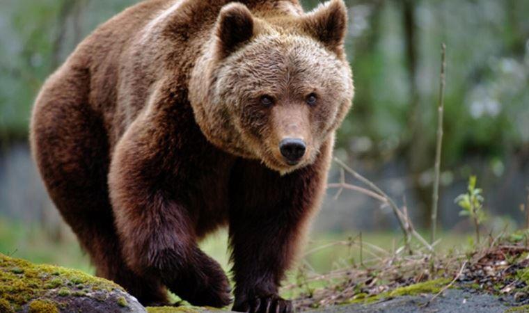 Kars'ta ayı köylülere saldırdı