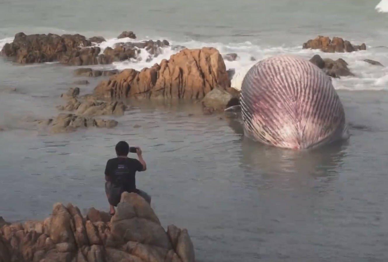 Dev balina kıyıya vurdu