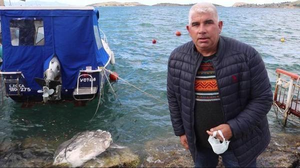 Foça sahiline avlanması yasak ölü ay balığı vurdu