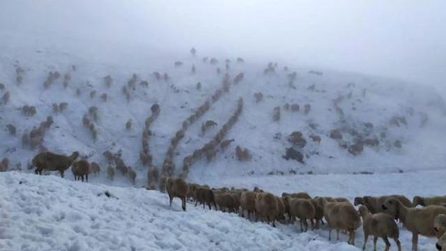 600 koyunla kar altında mahsur kalan çoban böyle kurtuldu