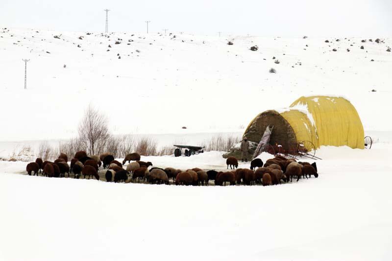 Doğu Anadolu Bölgesi'nde kar yağışı etkili oldu - Resim: 3